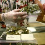 Concede SCJN otro amparo para consumo lúdico de marihuana