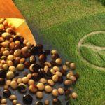 Los organismos genéticamente modificados y el derecho de los pueblos indígenas